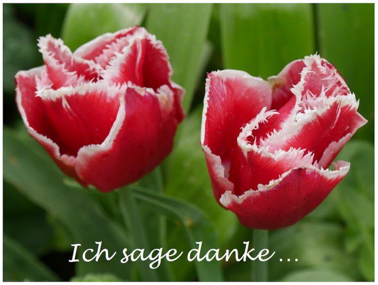 Auch von meiner Seite aus einfach mal Danke! | Gila Hanssen  / pixelio.de